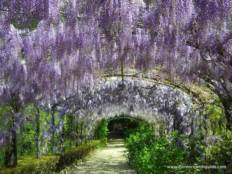 cerchiata glicini giardino Bardini