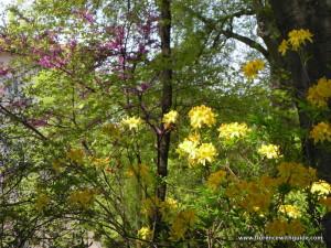 fioriture d'aprile al bardini