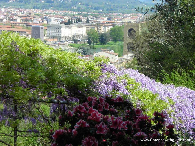 azalee e glicini giardino Bardini